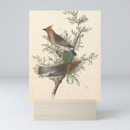 Vintage Print - Birds of America (1840) - Cedar Bird / Cedar Waxwing Mini Art Print