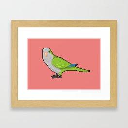 Pixel / 8-bit Parrot: Green Quaker Parrot Framed Art Print