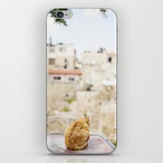 Cat Overlooking Ancient Ruins, Israel iPhone & iPod Skin