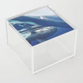 Shark on the Surface Acrylic Box