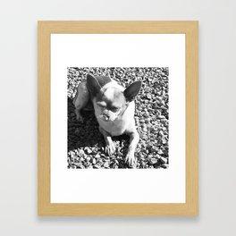 Chi In Bliss Framed Art Print