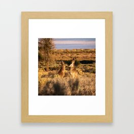 Mother and Joey Kangaroos Framed Art Print