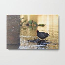 Birds from Pantanal Frango dagua Metal Print