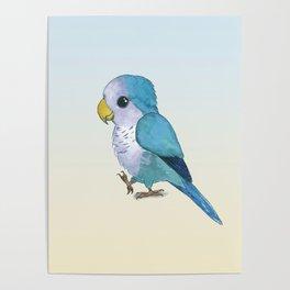 very cute blue quaker parrot Poster
