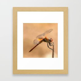 Painted Dragonfly Isolated Against Ecru Framed Art Print