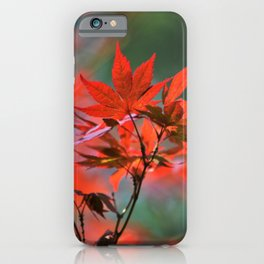 Scarlet Japanese Maple Leaves iPhone Case