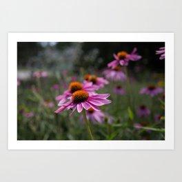 Northeastern Bloom Art Print