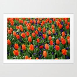Tulip Field 2 Art Print