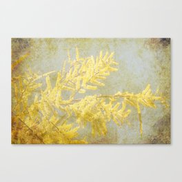 Golden Wattle Canvas Print