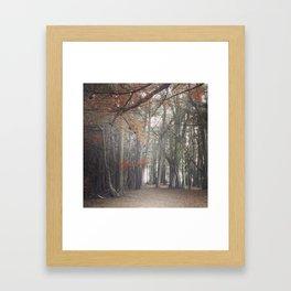 Light through the Cypress Framed Art Print
