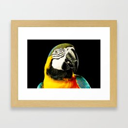 Portrait of a Parrot Framed Art Print