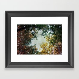forest 015 Framed Art Print