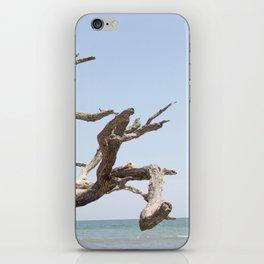 Driftwood Tree iPhone Skin