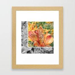 Alstroemeria 3 Framed Art Print