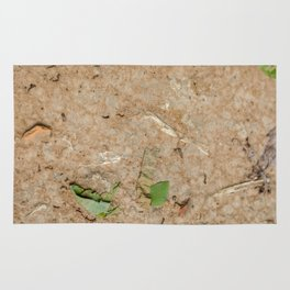 Remains at the Surface II, Killing Fields, Cambodia Rug