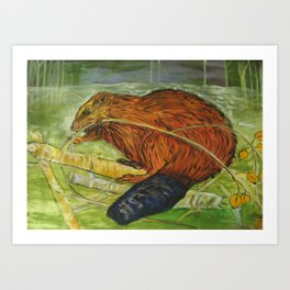 Beaver chews on a stick!  Art Print