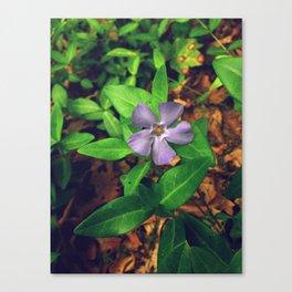 Fiore Viola Canvas Print