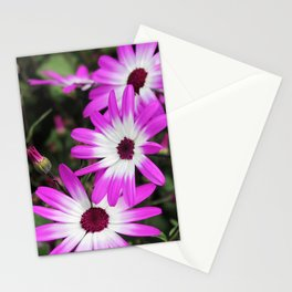 violet flowers Stationery Cards