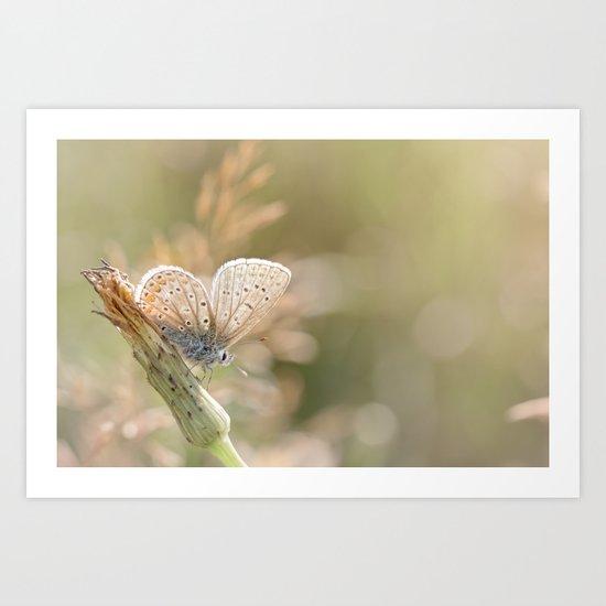 Sunbathing butterfly... Art Print