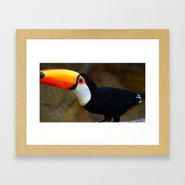Toucan 2 Framed Art Print