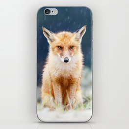 I Can't Stand the Rain (Red Fox in a rain shower) iPhone Skin