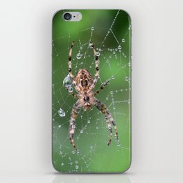 Macro Spider and Spider Web iPhone Skin