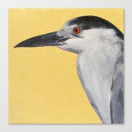 Black-Crowned Night-Heron Canvas Print