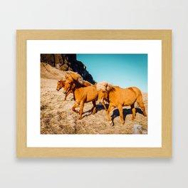 Wild Shaggy Ponies Framed Art Print