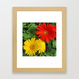 Colorful Daisies Framed Art Print