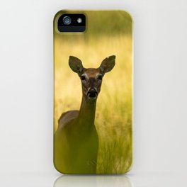 Keeping Tabs - Watchful Young Deer Through Tree Leaves in Wyoming iPhone Case