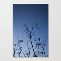 night sky Canvas Prints featuring Night Sky by Shy Photog