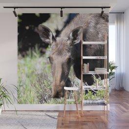 Watercolor Moose Cow 03, Kawuneeche Valley, RMNP, Colorado, Grazing Beauty Wall Mural