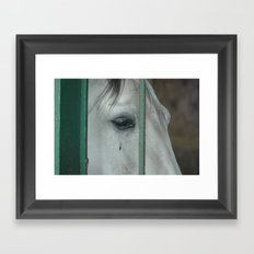 Horse....of course Framed Art Print