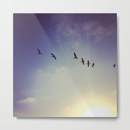 Sky High Pelicans Metal Print