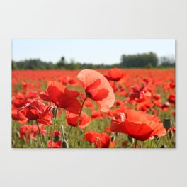 Red Poppy Field Canvas Print