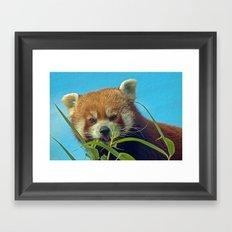 RED PANDA LOVE Framed Art Print