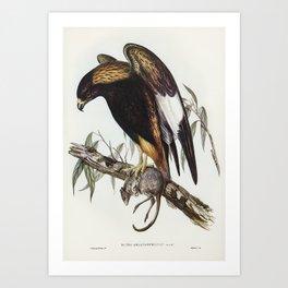 Black-Breasted Buzzard (Buteo melanosternon) illustrated by Elizabeth Gould (1804–1841) for John Gou Art Print