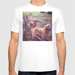 Vintage golden retriever dogs lined up T-shirt