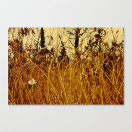 Snow covered pond reeds Canvas Print