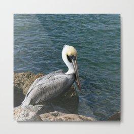 Pelican DPG160301b Metal Print