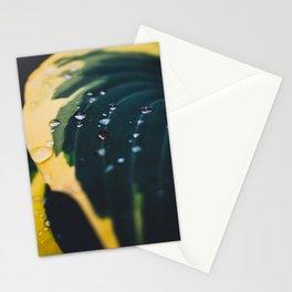 Fresh World Stationery Cards