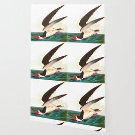 Black Skimmer or Shearwater John James Audubon Vintage Scientific Hand Drawn Illustration Birds Wallpaper