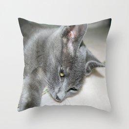 Close Up Of A Grey Kitten Throw Pillow
