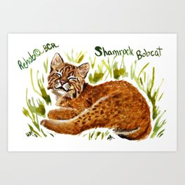 Shamrock Bobcat Smile Art Print
