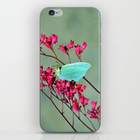 butterfly iPhone & iPod Skins featuring butterfly by  Agostino Lo Coco