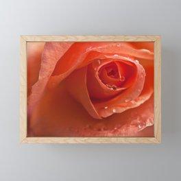 roses dream Framed Mini Art Print