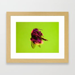Bugged #33 Framed Art Print