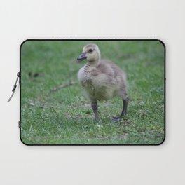 baby gosling (canada goose) Laptop Sleeve