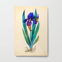 Dark Blue Iris Metal Print