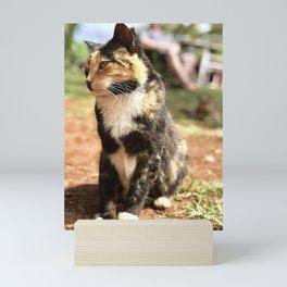 Sweet Calico (Lanai Cat Sanctuary) Mini Art Print